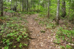 Appalachian Trail path